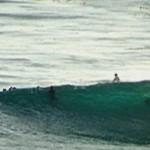 surf shark
