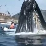 kayak whale
